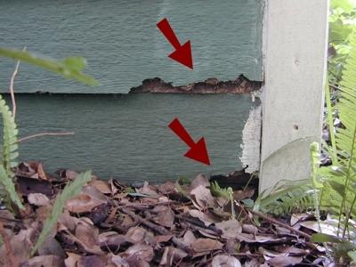 damaged-siding-contacting-ground.jpeg