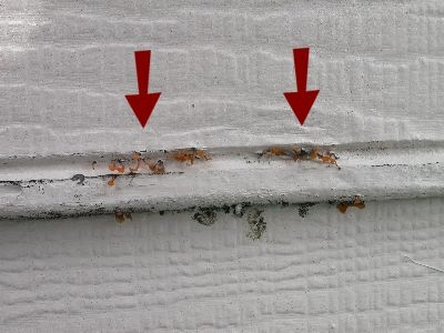 siding-fungus-growth-.jpeg