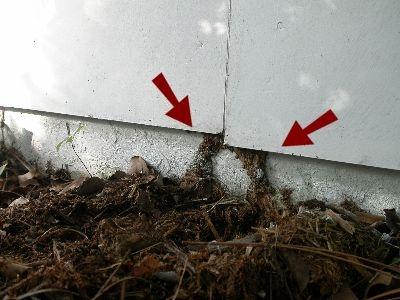 termite-tubes.jpeg